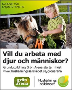 GrönArena_slide