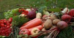 grönsaker o bär