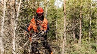 skogsvardare_arbmutb