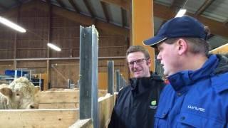 Henrik Jeansson och HS egen byggrådgivare Johan Johansson tittar på några av gårdens avelstjurar.