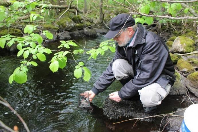 Ny_öringbäck_i_Alsteråns_vattensystem-1